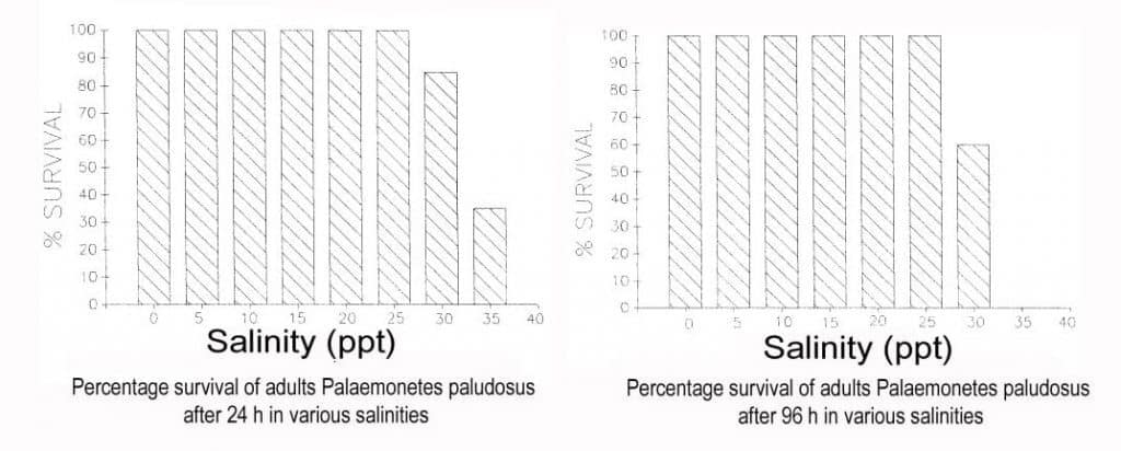 Percentage survival of adults Gost shrimp in salinity