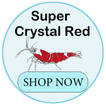 Super crystal shrimp