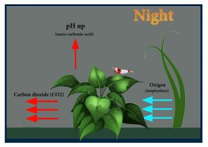 Photosynthesis shrimp tank night