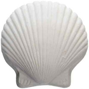 Wonder Shells