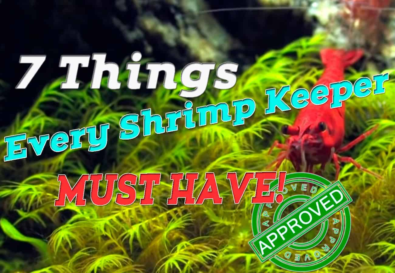 7 Things Every Shrimp Keeper Must Have