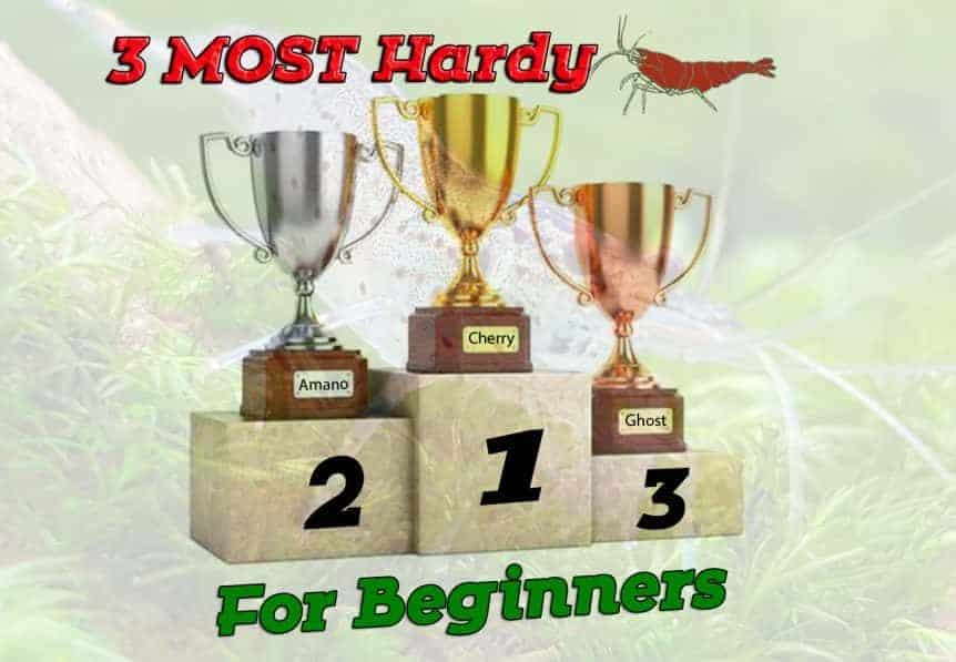 3 Most Hardy Freshwater Dwarf shrimp For Beginners