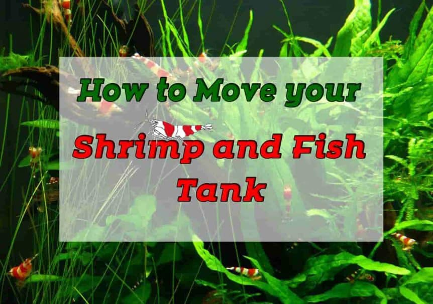 How to Move Your Shrimp or Fish Tank - Shrimp and Snail Breeder