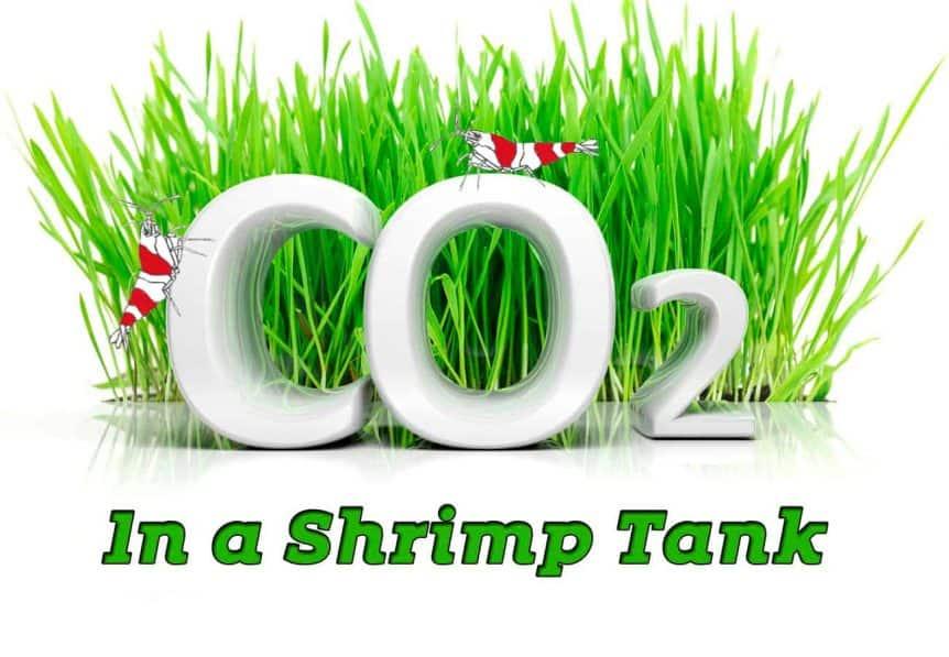 CO2 in a shrimp tank