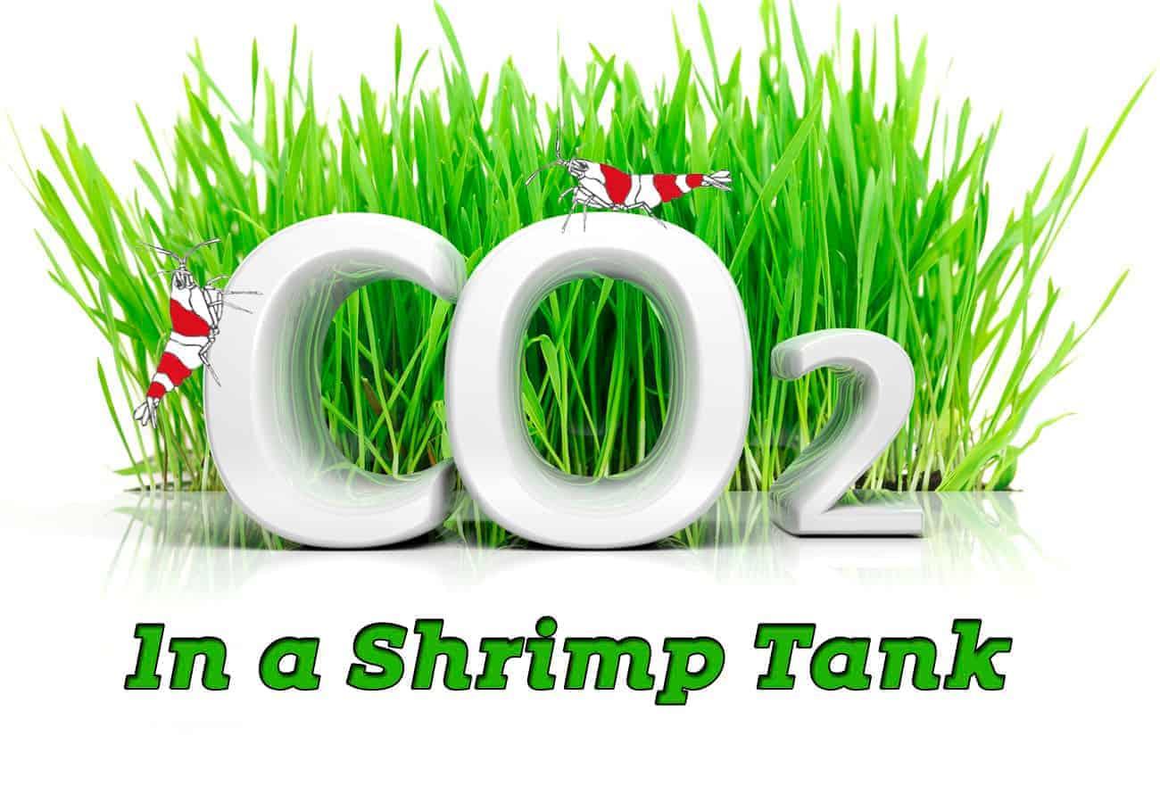 CO2 in a Shrimp Tank - Shrimp and Snail Breeder