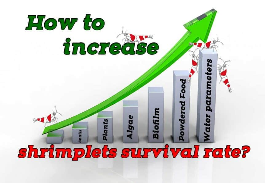 How to increase shrimplets survival rate? - Shrimp and Snail