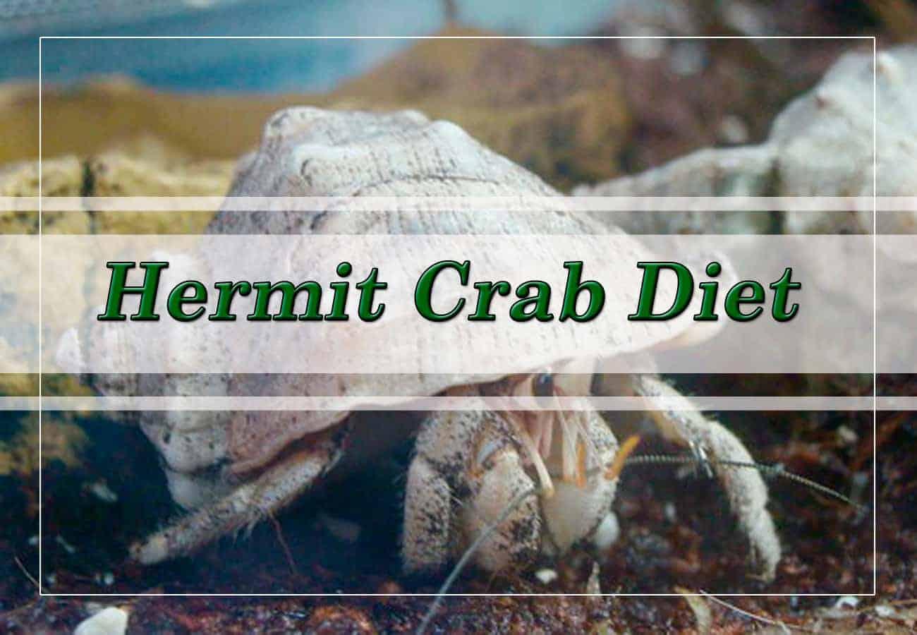 Hermit Crab Diet