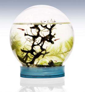 Ecospheres For Opae Ula Shrimp