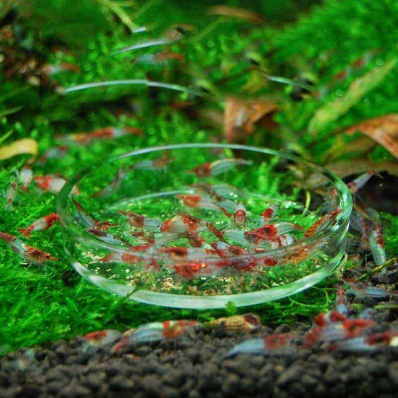 Everything about Feeding Dishes for Shrimp