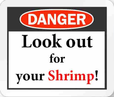 Hints for Survival and How Do Not Kill Your Shrimp