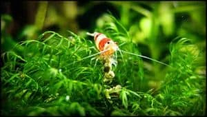 Top 5 Pros and Cons of having Plants in Shrimp Aquarium