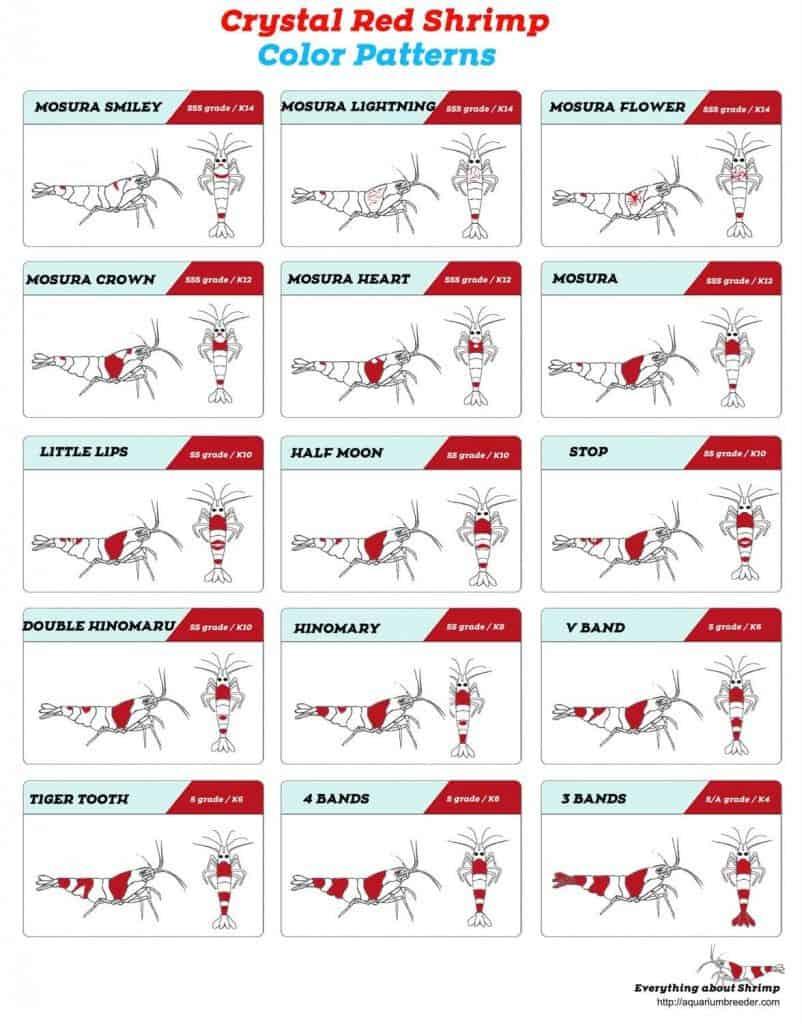 Cyrystal Red shrimp Pattern list