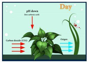 Photosynthesis shrimp tank day