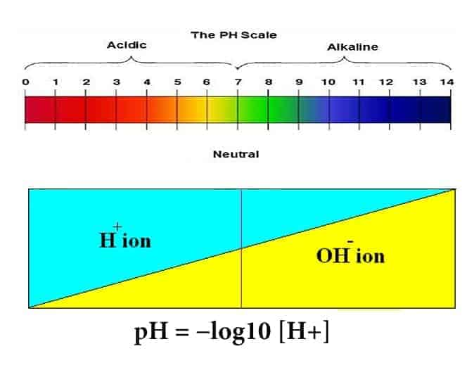 Water Parameters Everything About Ph In Shrimp Tank Shrimp And Snail Breeder