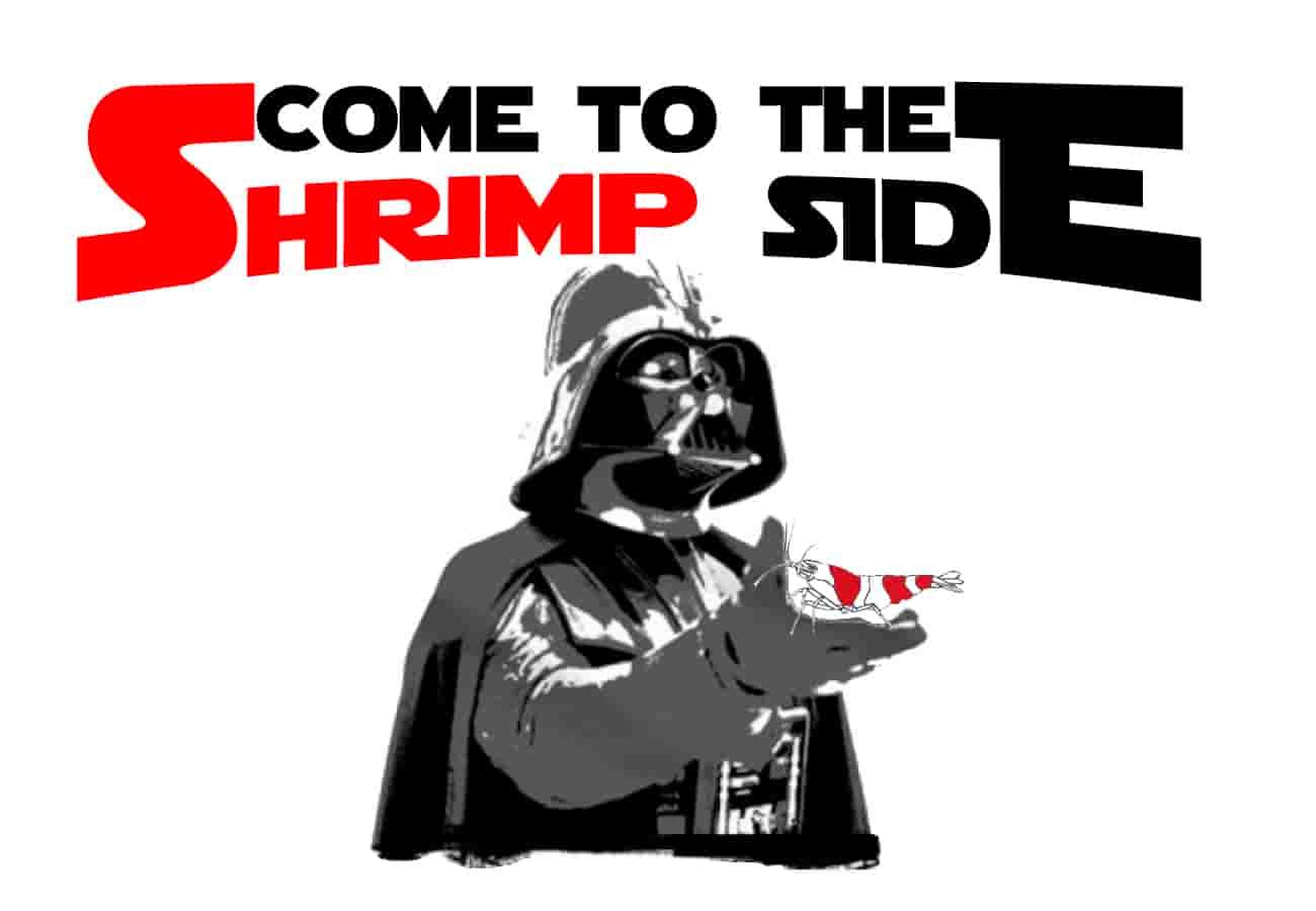 Dwarf shrimp - Come to the Shrimp side