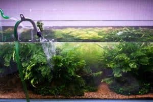 Water-change-aquarium