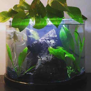 Pothos plants