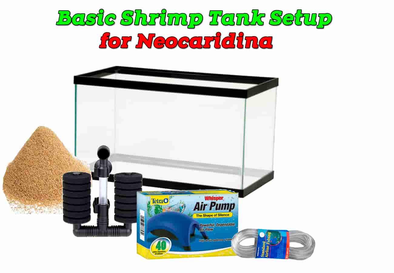 Basic Shrimp Tank Setup for Neocaridina.