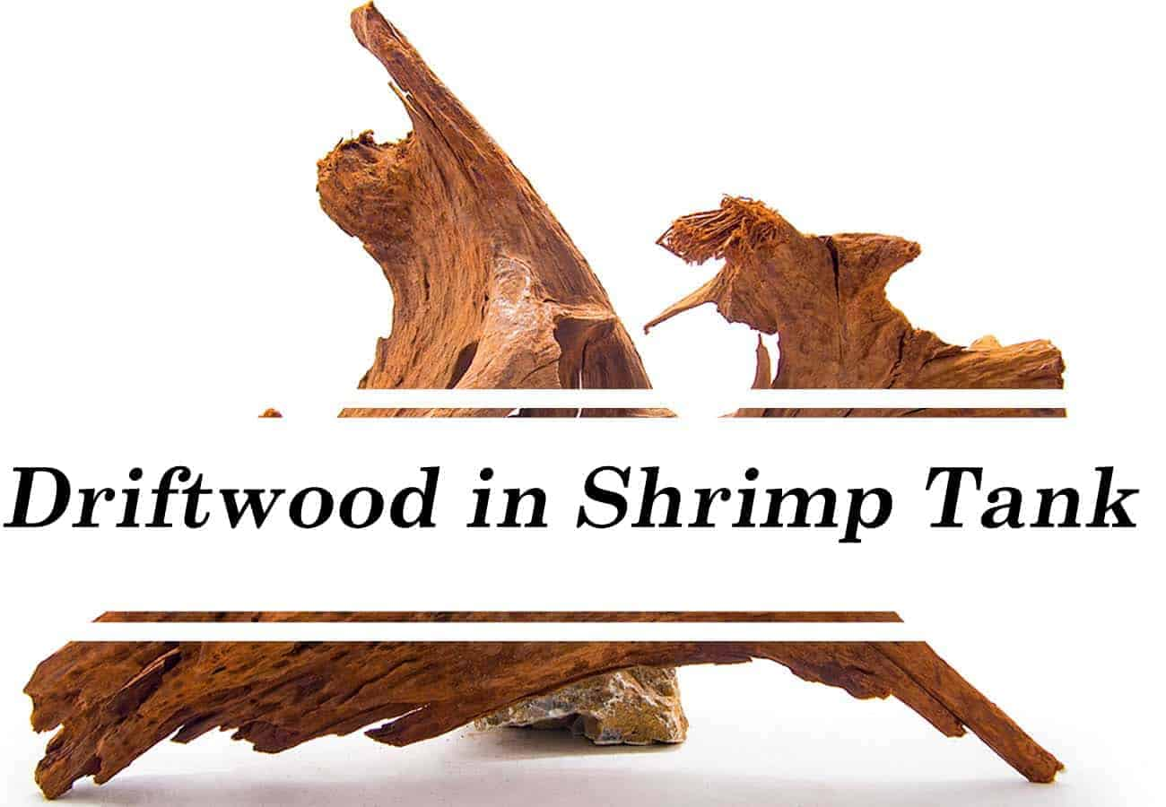 Driftwood in a shrimp tank