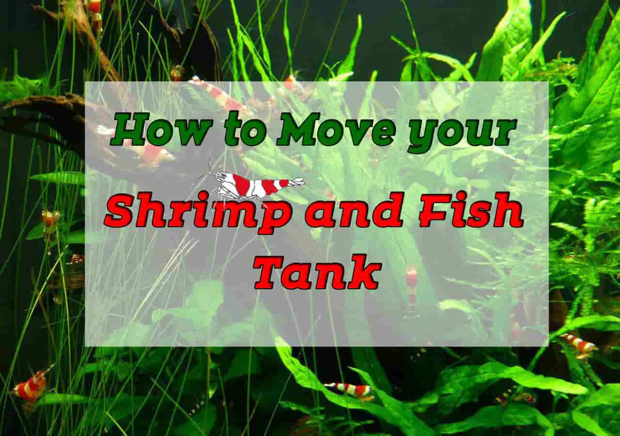 How to Move Your Shrimp or Fish Tank