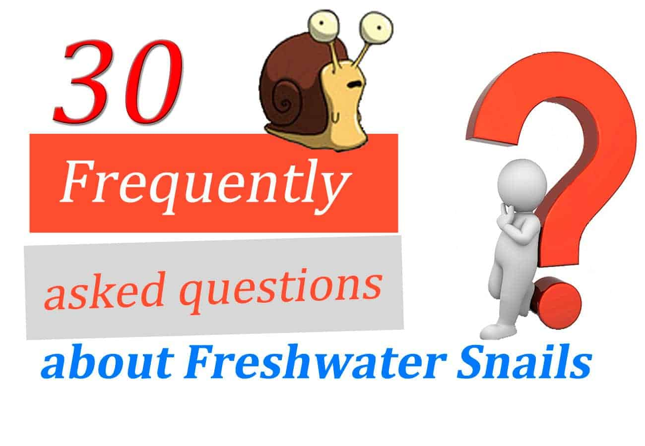 30 Frequently Asked Questions about Snails in Freshwater Tanks