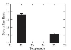 How temperature effects Marisa Cornuarietis Snails eggs