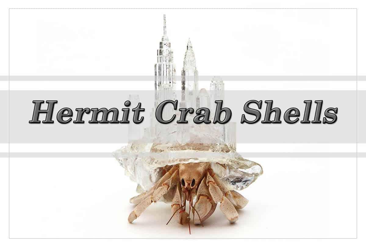 Hermit Crab Shells (city on the back - Aki Inomata)