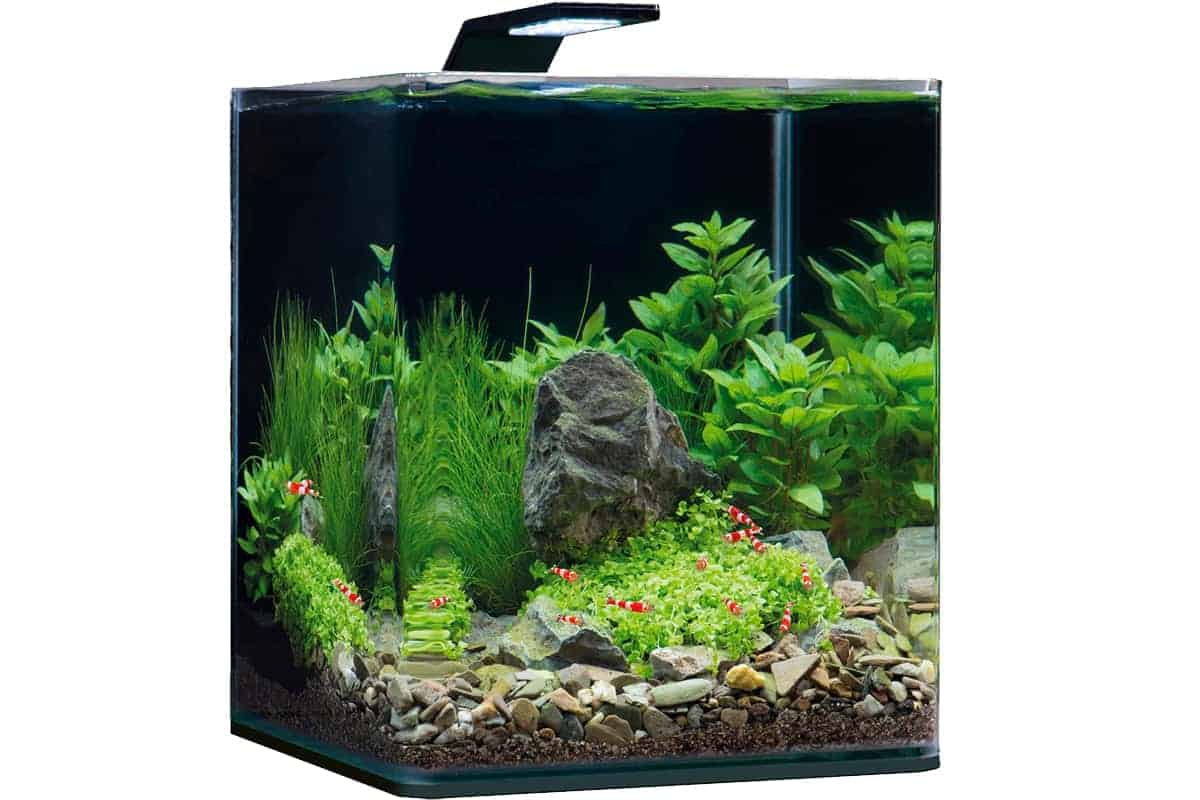 Top 7 Nano Aquarium Plants