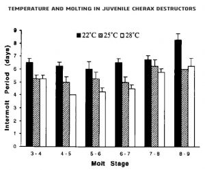 temperature and molting in Juvenile Cherax destructors