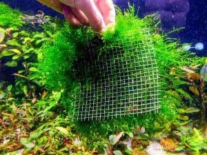 Attaching Java Moss to mesh. Propagation