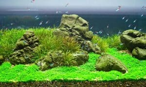 Iwagumi Aquascaping