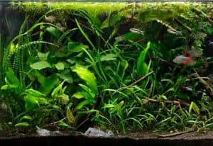 Jungle Aquascaping