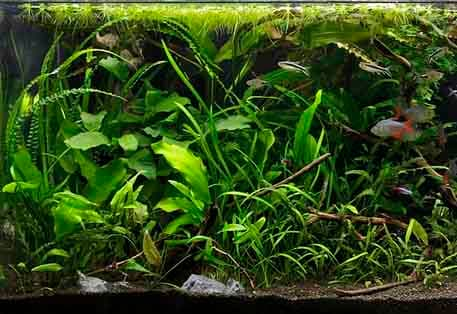 Aquascaping For Beginners Introduction Shrimp And Snail Breeder