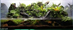 Paludariums aquascaping
