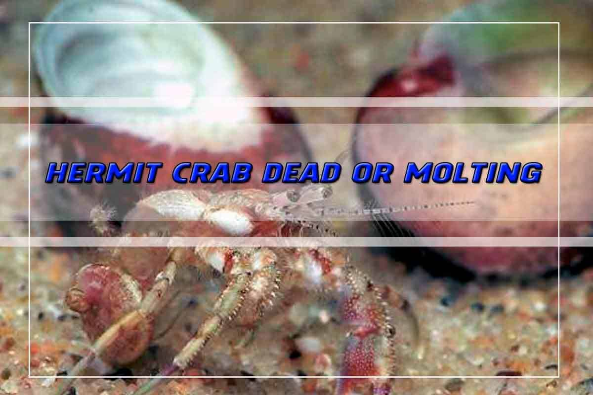 Pet, Care, Hermit Crab Dead or Molting