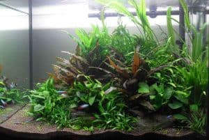 Walstad Aquascaping