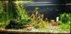 Difference between Aquarium, Terrarium, Riparium, and Paludarium