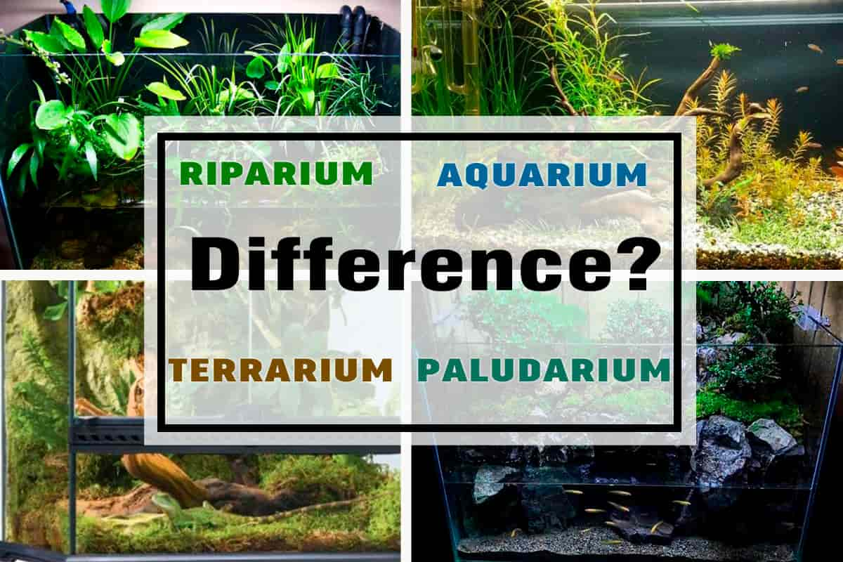 Difference Between Aquarium Terrarium Riparium And Paludarium Shrimp And Snail Breeder