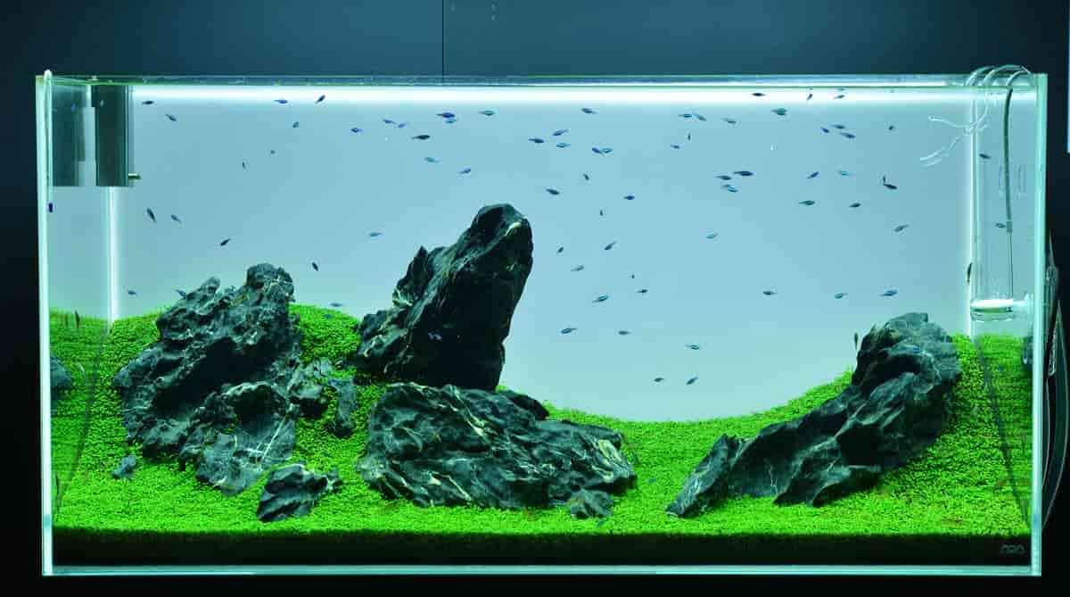 How To Set Up An Iwagumi Aquarium Shrimp And Snail Breeder