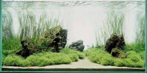 Iwagumi aquascape - Style 3 Sand Sanzon