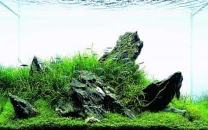 Iwagumi aquascape - Style 4 Rays