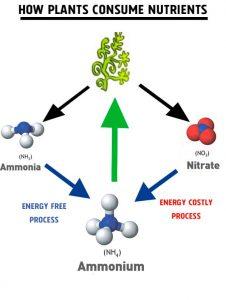 Plants, Nitrates, ammonia and ammonium