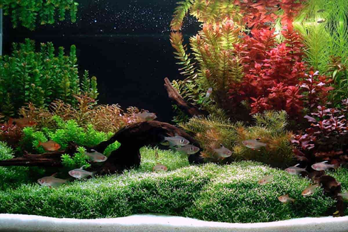 How to Set Up a Dutch Aquarium