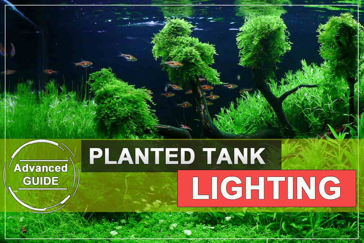 Advanced Guide to Lighting a Planted Tank