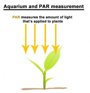 Aquarium and PAR measurement