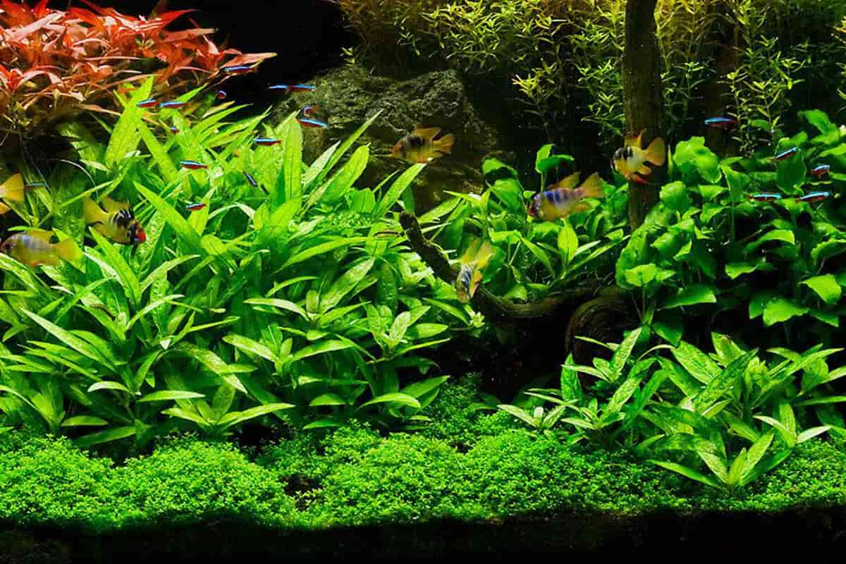 10 Tips For Rooted Aquarium Plants