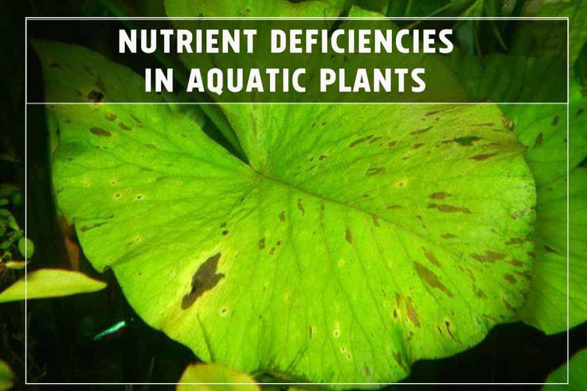 How to Spot Nutrient Deficiencies in Aquatic Plants