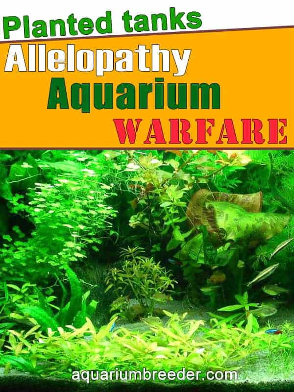 Allelopathy or Warfare in Aquarium Plants pinterest