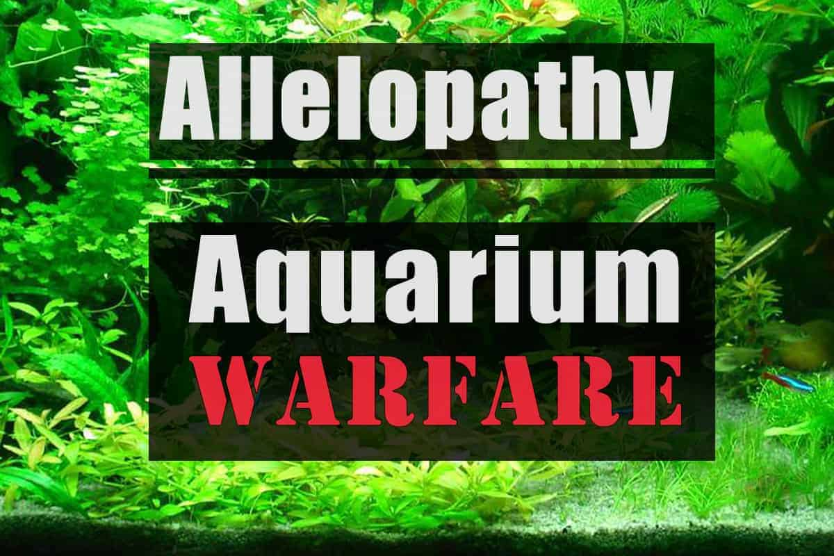 Allelopathy or Warfare in Aquarium Plants
