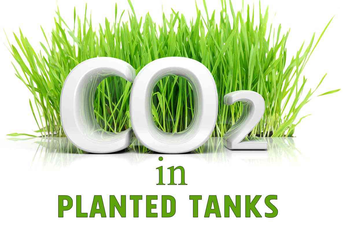 CO2 in a Planted Tank Guide